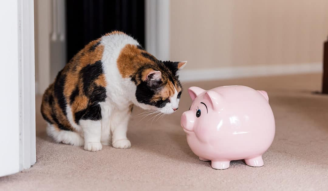 Cat nose to nose with piggy bank
